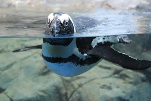 penguin小.jpg