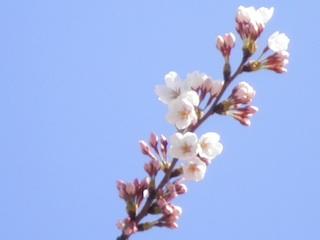 春、エンドカード.jpg