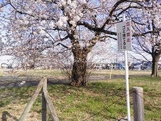 春10.jpg