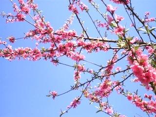 春9.jpg