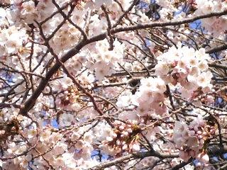 春11.jpg