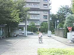 hachi29.jpg