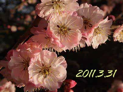 20110401.jpg