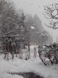 1雪景色.jpg