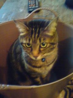 やっぱり箱が好き 猫.jpg