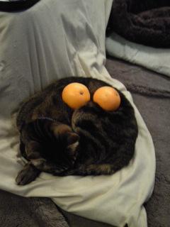 アンモナイト猫.jpg