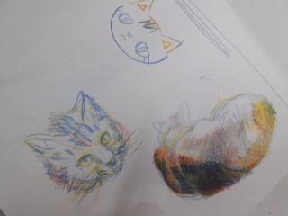 猫 P.jpg