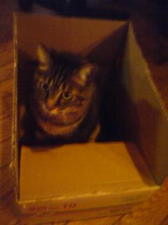 箱が好き 猫.jpg