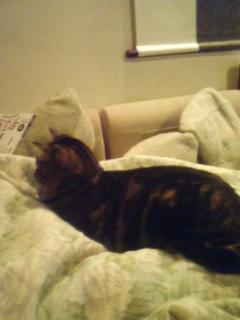 布団の上に乗る猫.jpg