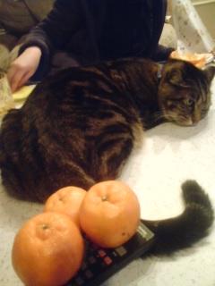 遊ばれる猫.jpg